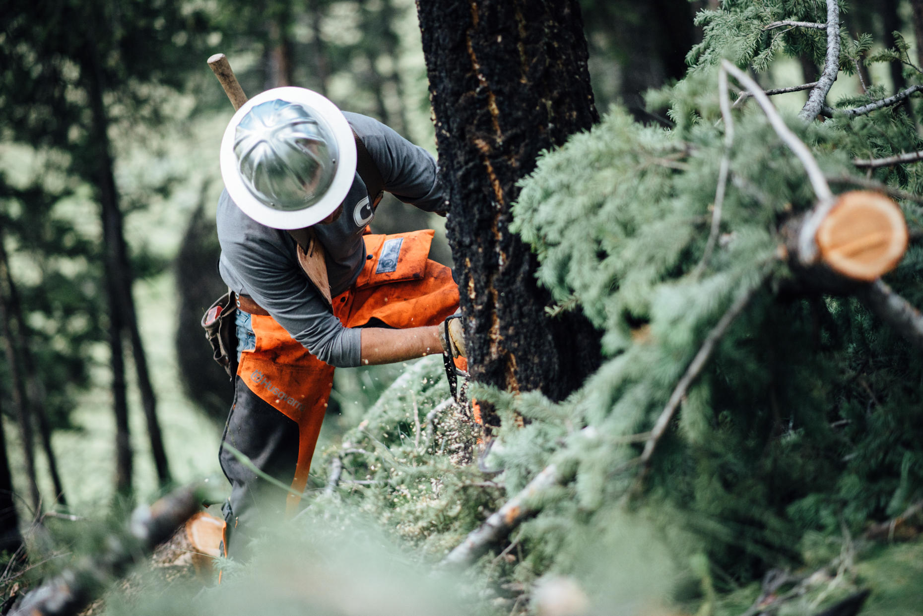 Logger using Stihl chainsaw in Montana. Isaac Miller Photography  | Agriculture & Industry Photographer  |  Commercial & Editorial photography  |   Missoula + San Antonio